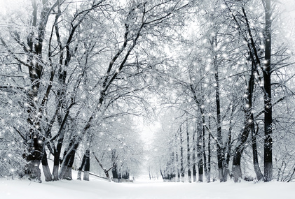 Winter scenery, frosty trees and snowstorm in a city park